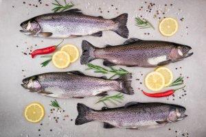 Süßwasser Fische