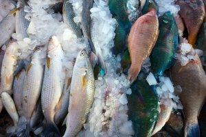 Edel- und Plattfische