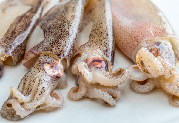 Calamaretti frisch